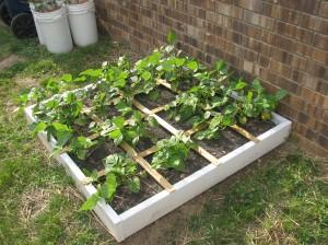 Garden and misc 016